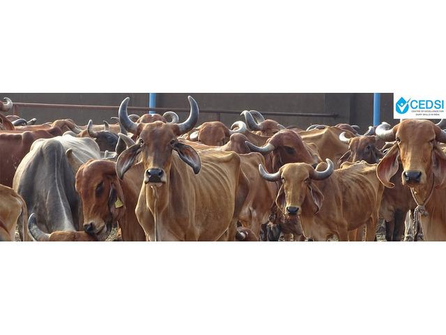 CEDSI- Dairy Entrepreneurship - 1/2