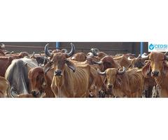 CEDSI- Dairy Entrepreneurship - Image 1/2