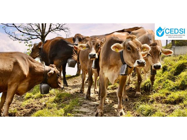 CEDSI- Dairy Entrepreneurship - 2/2