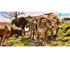 CEDSI- Dairy Entrepreneurship - Image 2/2