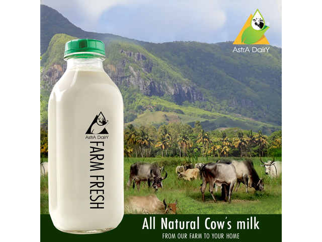 Fresh Cow Milk Dealers in Chennai - 1/1
